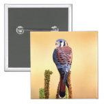 Kestrel, Falco sparverius, Native to US & Canada Pin