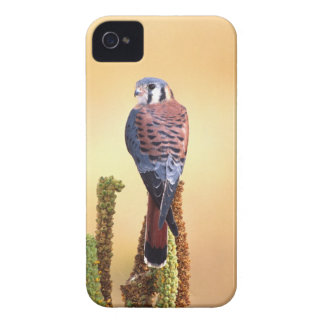 Kestrel, Falco sparverius, Native to US & Canada Blackberry Bold Covers
