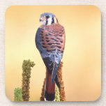 Kestrel, Falco sparverius, Native to US & Canada Coaster