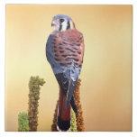 Kestrel, Falco sparverius, Native to US & Canada Ceramic Tile