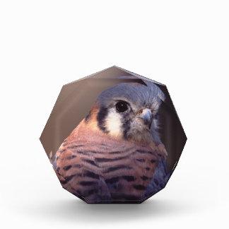kestrel, falcon award