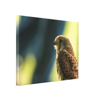 Kestrel in Captivity Canvas Print