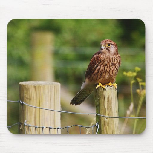 Kestrel Mousepads
