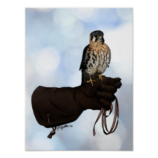 Kestrel on Glove Illustration Poster
