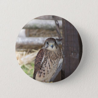 Kestrel perched on a fence post button