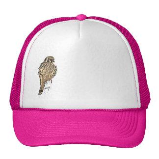 Kestrel Raptor Bird Hat