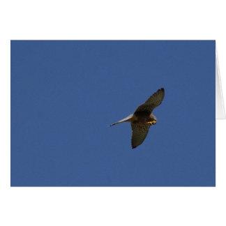 Kestrel, Turmfalke, falco tinnunculus Card