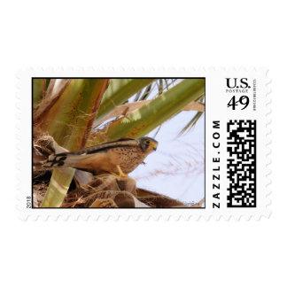 Kestrel, Turmfalke, falco tinnunculus Stamp