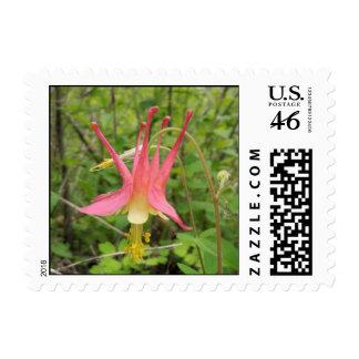 Kettle Moraine Flower Stamp