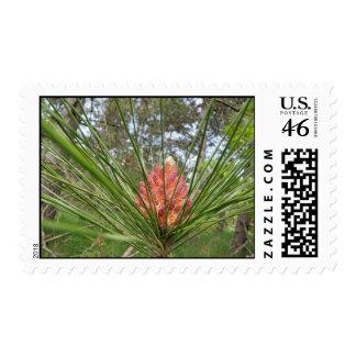 Kettle Moraine Flowering Pine Tree Stamp