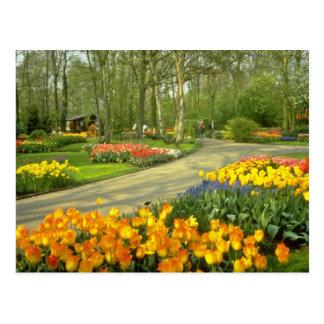 Keukenhof amarillo cultiva un huerto cerca de postales