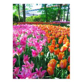 Keukenhof garden - Holland postcard