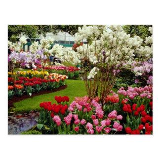 Keukenhof gardens in Lisse, south of Amster Post Card