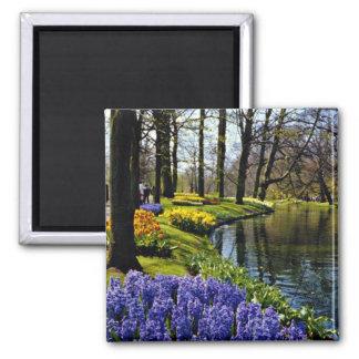 Keukenhof Gardens, Lisse, Netherlands  flowers Magnets