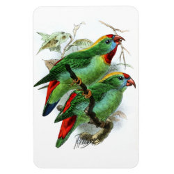 4'x6' Photo Magnet with Keulemans' Philippine Hanging Parrot design