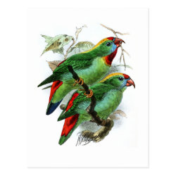 Postcard with Keulemans' Philippine Hanging Parrot design