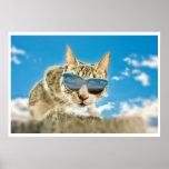 Kewl Kat que lleva Sunglassses Posters