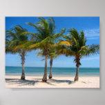 Key Biscayne palms Print