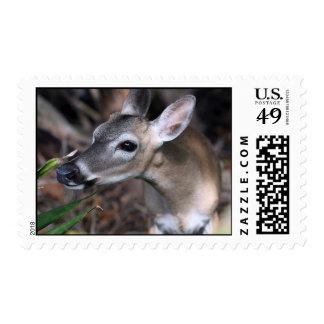 Key Deer Postage