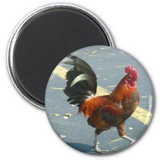 Key West Chicken Refrigerator Magnet