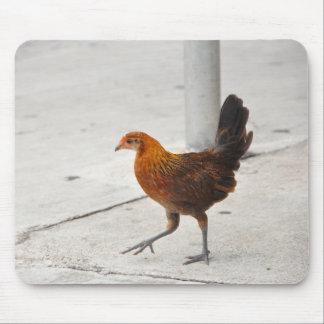 Key West Chicken On Sidewalk Florida Mousepad