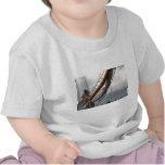 Key West envía la camiseta del niño