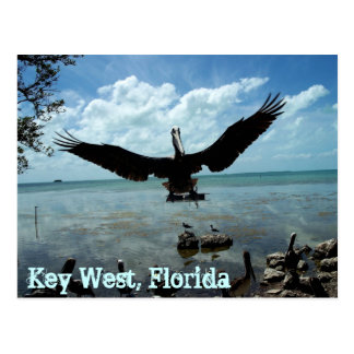 Key West Florida Pelican Wildlife Post Card Photo