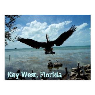 Key West Florida Pelican Wildlife Post Card Photo