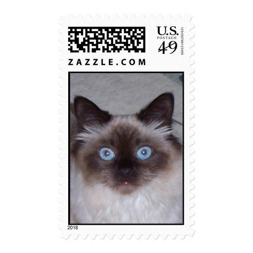 key west kitty postage