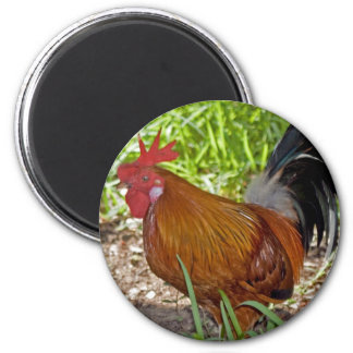 Key West Rooster 2 Inch Round Magnet