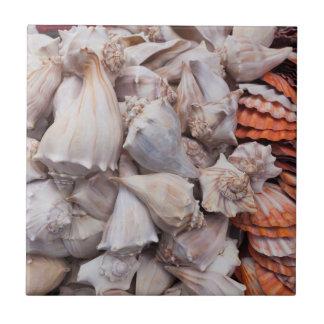 Key West, seashells Azulejo Cuadrado Pequeño