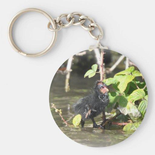 Keychain: Moorhen Chick