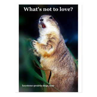 Keystone Prairie Dogs what's not to love? Postcard