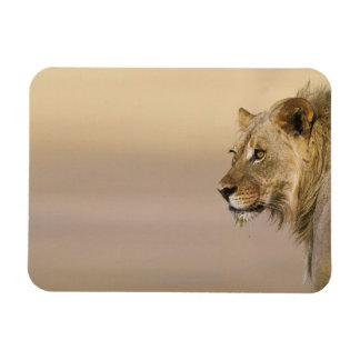 Kgalagadi Transfrontier Park, Northern Cape Rectangular Photo Magnet