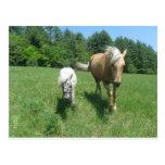 Khrysta, el caballo de Morgan, y efectivo, los min Postal