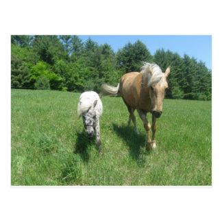 Khrysta, el caballo de Morgan, y efectivo, los Tarjeta Postal