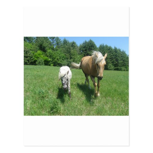 Khrysta, the Morgan horse, and Cash, the mini hors Post Cards