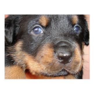 Kia Ora ...I'll be Your Dog Postcard