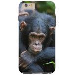 Kibale chimpanzee cell phone case tough iPhone 6 plus case