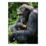 "Kibale Chimpanzee Greeting Card -- ""Mama Umbrella"""
