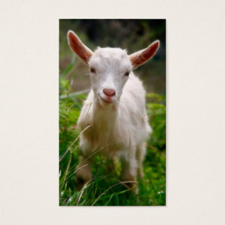 Kid Goat Business Card
