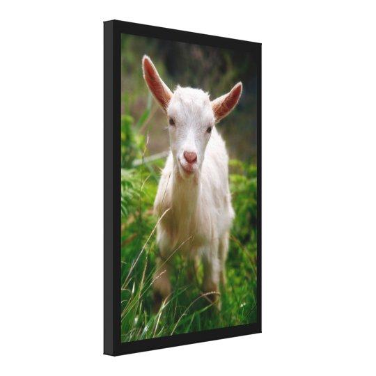 Kid Goat Canvas Print