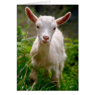 Kid Goat Card