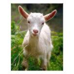 Kid Goat Custom Flyer