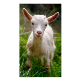 Kid Goat Double-Sided Standard Business Cards (Pack Of 100)