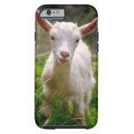 Kid Goat iPhone 6 Case
