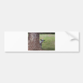 Kid (goat) Peeking From Behind a Tree Bumper Sticker