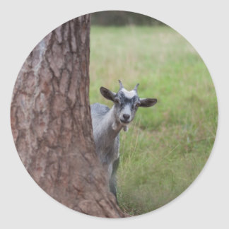 Kid (goat) Peeking From Behind a Tree Classic Round Sticker