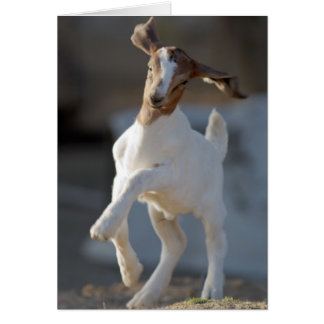 Kid goat playing in ground. greeting card
