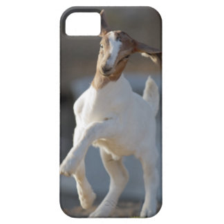 Kid goat playing in ground. iPhone SE/5/5s case